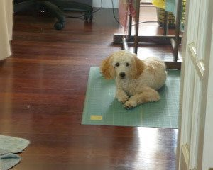 Quilting Poodle
